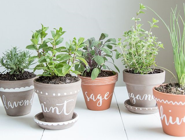 As arom ticas vaso e cia - Aromatic herbs pots multiple benefits ...