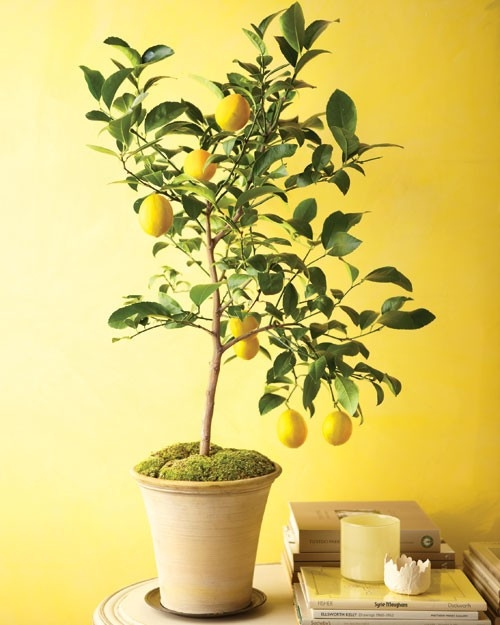uniq fruit indoor fruit trees