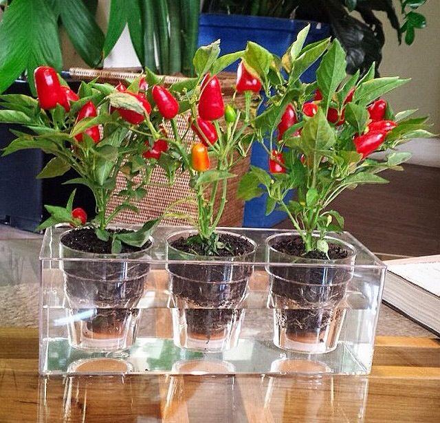 Plantas feng shui vaso e cia for Plantas para dormitorio feng shui