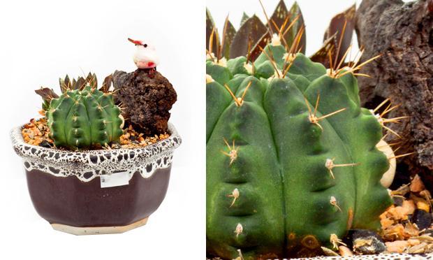 minicactos-plantas-ambientes-fechados