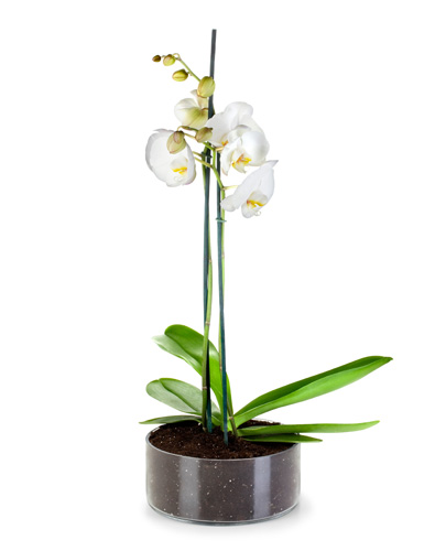 orquideas-decoracao-grande