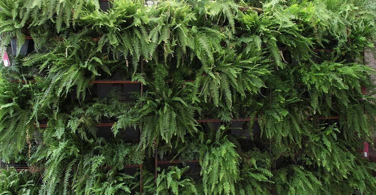 Jardim Vertical Vaso e Cia