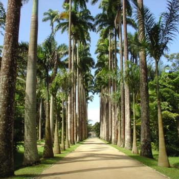Jardim-Botanico-Rio-de-Janeiro