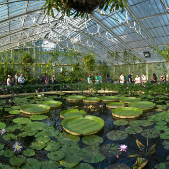 Kew_Gardens_Waterlily_House_-_Sept_2008