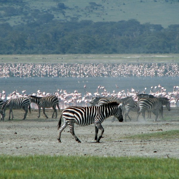 Parque Nacional do Serengeti